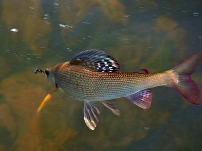 Рыбалка на Байкале!